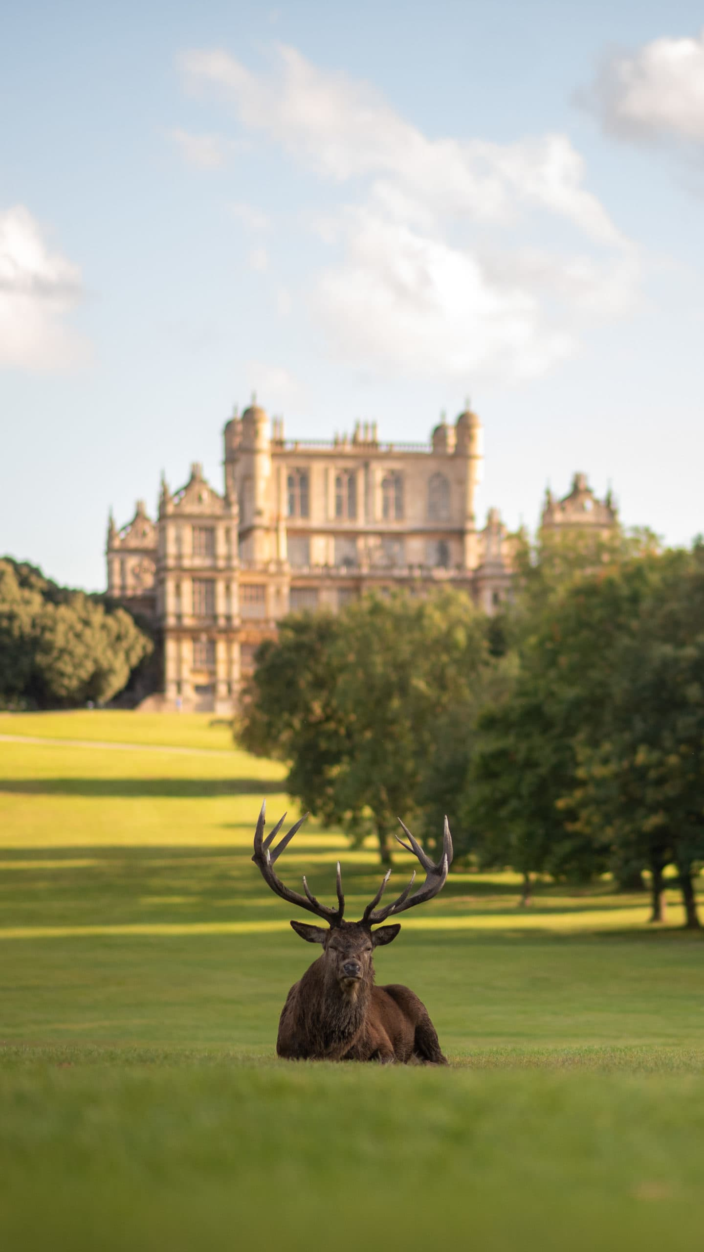 A deer resting outside Wollaton Hall